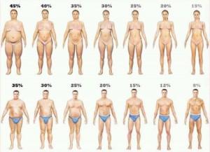 - نسبة دهون الجسم - الوزن المثالي