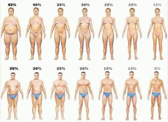 نسب الدهون