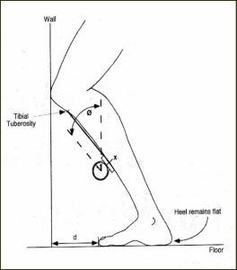 lunge-test4-264x300