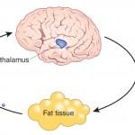 كيفية زيادة حرق الدهون و التخسيس بأستخدام اليوم الفري او اليوم المفتوح