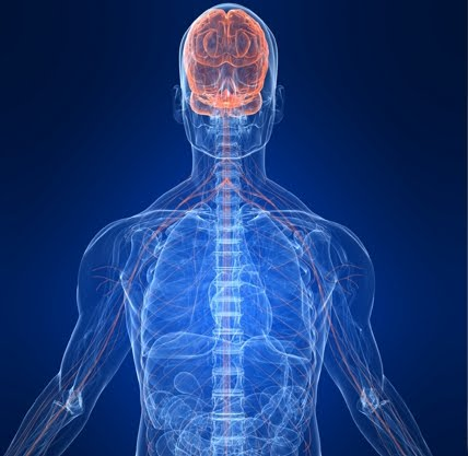 الترابط العقلي العضلي لعلاج مشكلة العضلات المتأخرة في النمو. 2