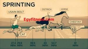 بالصور مقارنة بين سرعة و قوة الانسان و الحيوانات 7