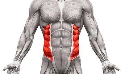 عضلات الاجناب