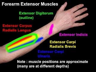 تأثير العادة السرية على لاعب كمال الأجسام و هرمون الذكورة و الركب 1
